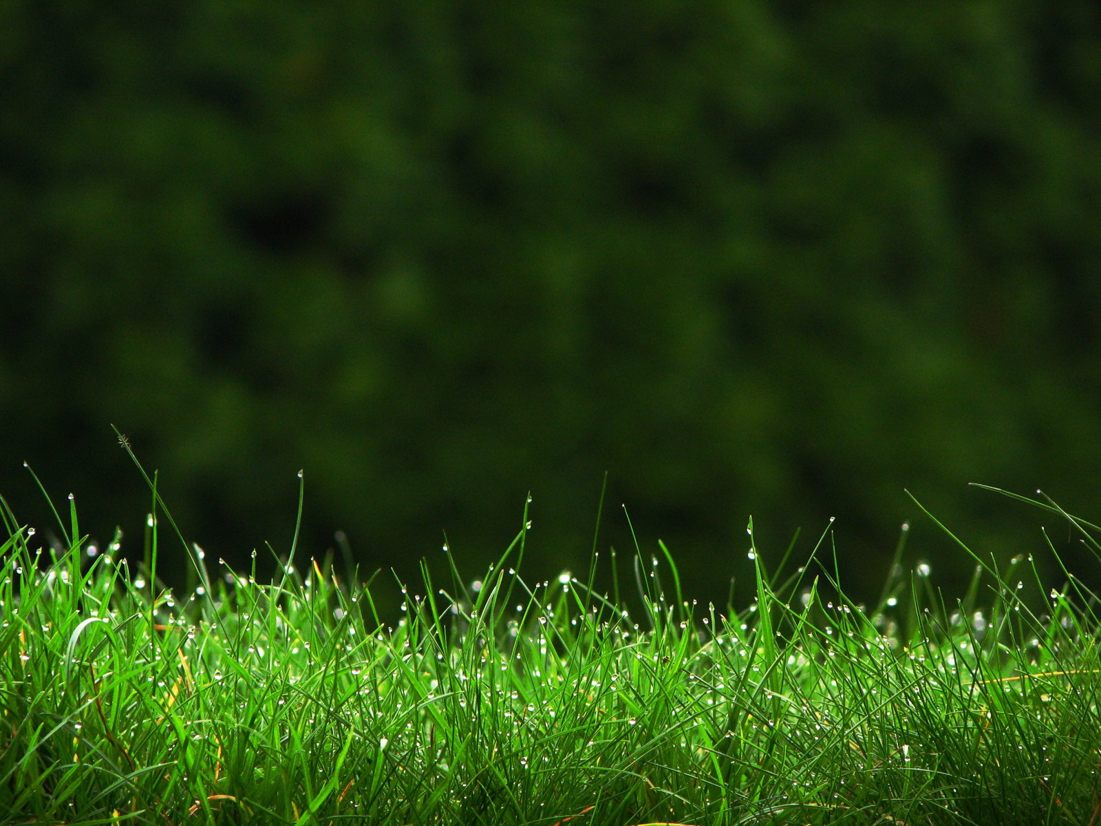 nằm mơ thấy cỏ