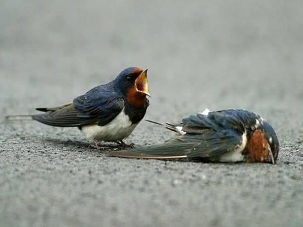 Mơ thấy chim én là điềm báo gì và con số may mắn
