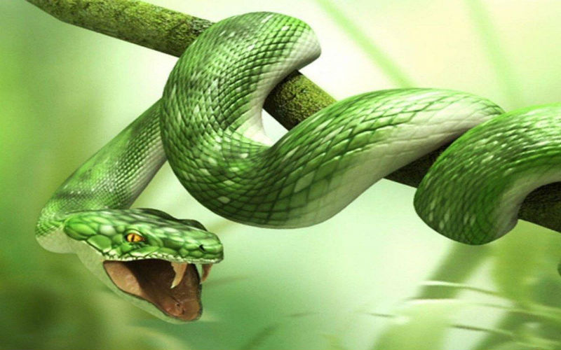 Mơ thấy rắn xanh điềm báo gì